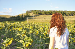 Femme regardant un gisement de tournesol le coucher du soleil Photo libre de droits