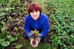 Femme retenant une plante dans des ses mains Photographie stock
