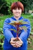 Femme retenant une plante dans des ses mains. Photographie stock