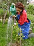 Femme rural arrosant la magnolia plantée photographie stock libre de droits