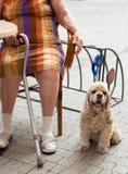 Femme s'asseyant en café avec un chien Photos stock