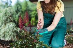 Femme s'inquiétant des fleurs Images stock
