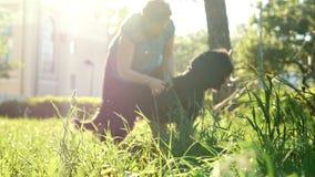 Femme se peignant les cheveux du ` s de chien, soin des animaux familiers en parc, jour d'été banque de vidéos