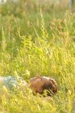 Femme se situant dans l'herbe Photo stock