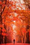 Femme seule marchant en parc un jour brumeux d'automne Images stock