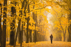Femme seule marchant en parc un jour brumeux d'automne Femme seule appréciant le paysage de nature en automne Images stock