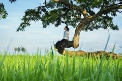 Femme seule s'asseyant sur un arbre photographie stock