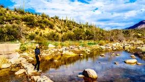 Femme supérieure à biffer lavé au-dessus de la crique presque sèche de sycomore dans la chaîne de montagne de McDowell en Arizona images stock