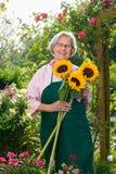 Femme supérieure avec des tournesols dans le jardin Photographie stock