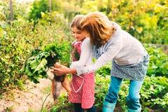 Femme supérieure avec le grandaughter faisant du jardinage dans le jardin d'arrière-cour Photo libre de droits