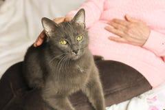 Femme supérieure dans le chandail rose choyant son vieil ami de chat Photo stock