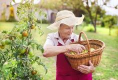 Femme supérieure dans son jardin Photo libre de droits