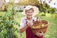 Femme supérieure dans son jardin Photos stock