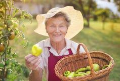 Femme supérieure dans son jardin Image libre de droits
