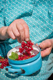 Femme supérieure en son jardin et groseilles rouges du cru Photographie stock