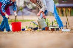 Femme supérieure et homme dans le jardin plantant et arrosant Photo libre de droits