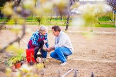 Femme supérieure et homme dans leur jardin plantant des graines Image stock