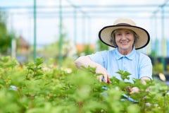 Femme supérieure heureuse appréciant le travail dans le jardin photos libres de droits
