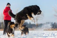 Femme supérieure jouant avec le chien dans la neige Image stock