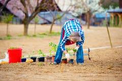 Femme supérieure plantant des jeunes plantes dans le sol dans le jardin Photo stock