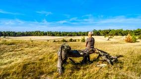 Femme supérieure s'asseyant sur un arbre mort dans le mini désert Beekhuizerzand dans le Hoge Veluwe photos stock