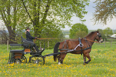 Femme sur le chariot Image libre de droits