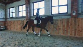 Femme sur le cheval marchant lentement sur l'arène clips vidéos