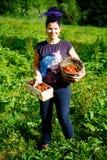 Femme sur un gisement de fraise, belles fraises dans un panier Image libre de droits