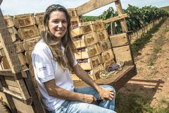femme sur un tracteur dans un vignoble Image stock