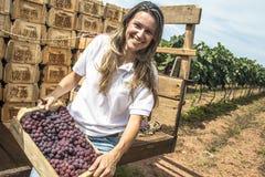 femme sur un tracteur dans un vignoble Photo stock