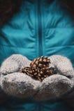 Femme tenant des cônes de pin dans des mitaines de laine Image stock