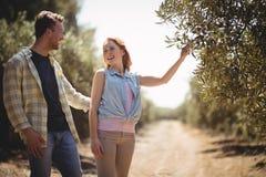 Femme tenant l'olivier tout en se tenant avec l'ami à la ferme Photo stock