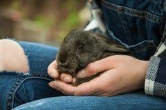 Femme tenant la petite fin mignonne de lapin  Photos stock