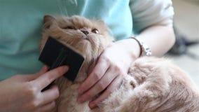 Femme tenant le chat persan dans son bras et peignant sa fourrure clips vidéos