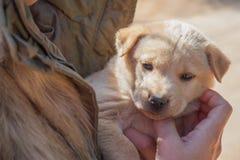 Femme tenant le chien de bébé Image libre de droits