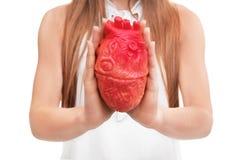 Femme tenant le modèle du coeur sur le fond blanc Photo libre de droits