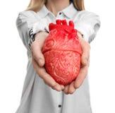 Femme tenant le modèle du coeur sur le fond blanc Images libres de droits