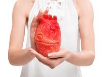 Femme tenant le modèle du coeur sur le fond blanc Photos libres de droits