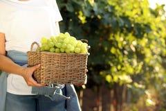 Femme tenant le panier avec des raisins juteux mûrs frais dans le vignoble images stock