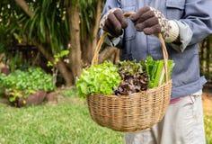 Femme tenant le panier en bois avec les légumes organiques frais de la ferme de jardin image libre de droits