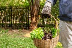 Femme tenant le panier en bois avec les légumes organiques frais de la ferme de jardin image stock