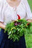 Femme tenant les herbes aromatiques Image libre de droits