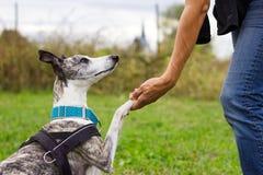 Femme tenant sa patte du ` s de chien dans la formation Photographie stock