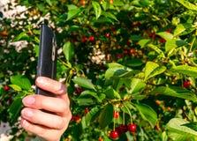 Femme tenant un téléphone intelligent dans sa main photos stock