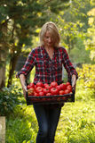 Femme tenant une boîte à tomate Images stock