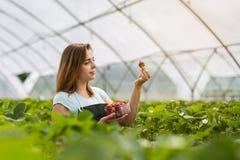 Femme tenant une fraise mordue juteuse dans l'appareil-photo, strawber Images stock