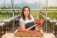 Femme tenant une fraise mordue juteuse dans l'appareil-photo, strawber Photo libre de droits