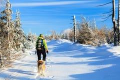 Femme trimardant avec le crabot en hiver Photos libres de droits