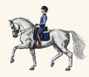 Femme trottant sur un cheval de dressage Photographie stock