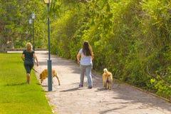 Femmes avec des animaux familiers marchant au parc Images libres de droits